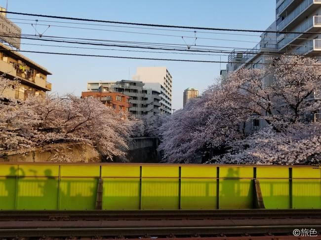 鈴木ちなみのランニング旅~荒川線と桜のおいしい関係!~③