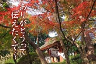 紅葉と鬼太郎の深大寺へ 調布で日帰りデート旅