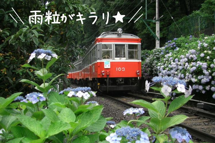 梅雨こそお出かけ!箱根あじさいの旅
