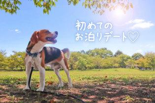 ワンちゃん連れOK! 長崎おさんぽ温泉旅行