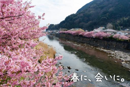 河津桜で春うらら伊豆でポカポカ温泉旅