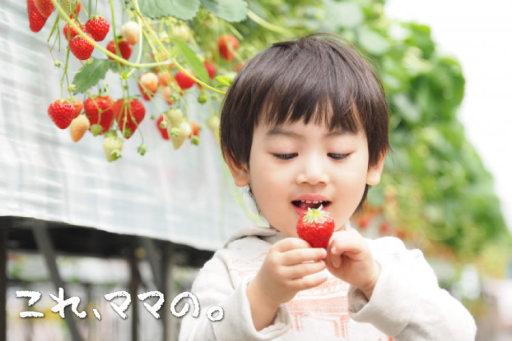 栃木で甘いイチゴ狩り!子連れで行く日帰り旅