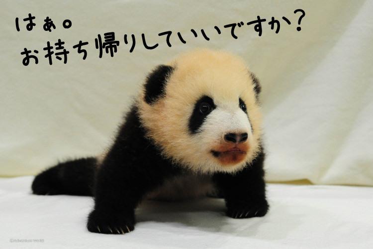 赤ちゃんパンダに温泉に癒しの和歌山・白浜旅