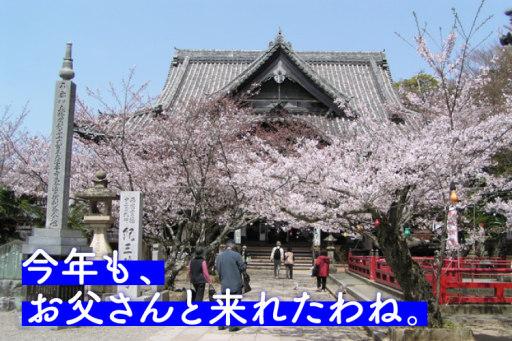 関西一早いお花見へ和歌山で夫婦のんびり旅