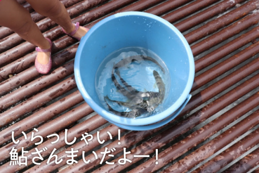 子供と夏の思い出づくり岐阜でアユつかみ体験旅