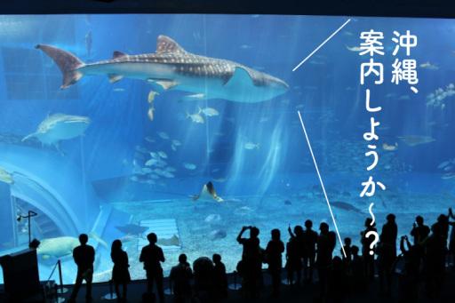 家族ではじめての旅行沖縄の観光名所を巡る旅