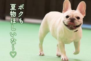 愛犬と一緒にのんびり 軽井沢でショッピング旅