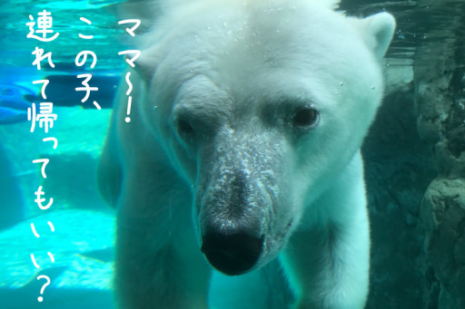夏休みは旭山動物園へ北海道で子連れ家族旅行
