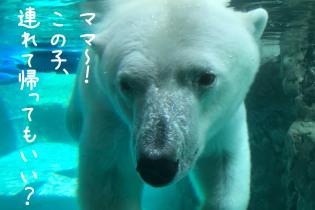 夏休みは旭山動物園へ 北海道で子連れ家族旅行