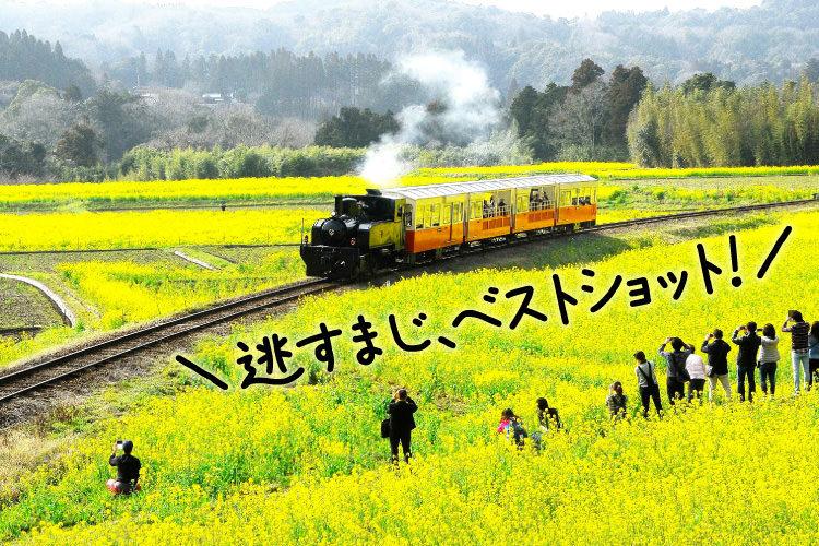 いすみ鉄道で行く菜の花を愛でる日帰り旅