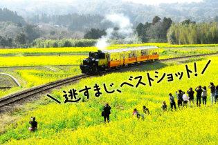 ローカル線で行く! 菜の花を愛でる旅
