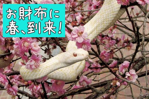 「白蛇神社」も訪ねる岩国で運気UPの一人旅
