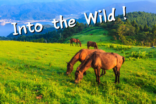 都井岬で野生の馬と対面歴史好きも必見の友達旅