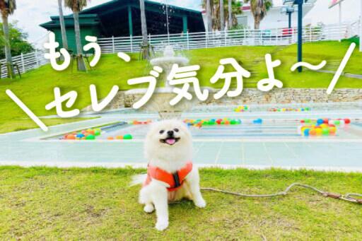 まるで海外リゾート! 淡路島へ愛犬と日帰り旅