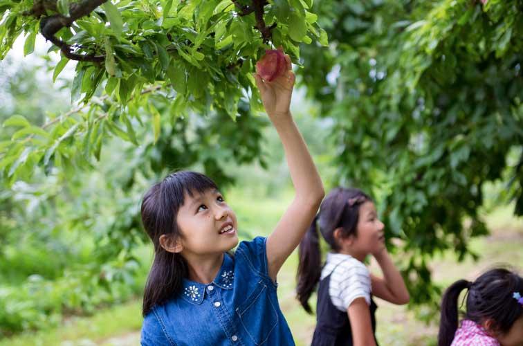 約6.5万平方mの敷地で、年間を通してさまざまなフルーツを栽培する「みなかみフルーツランドモギトーレ」