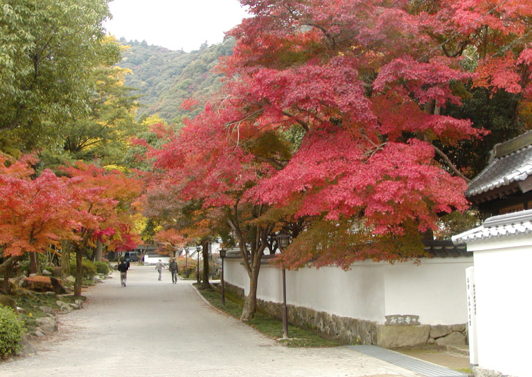 紅葉谷公園で紅葉を楽しむ