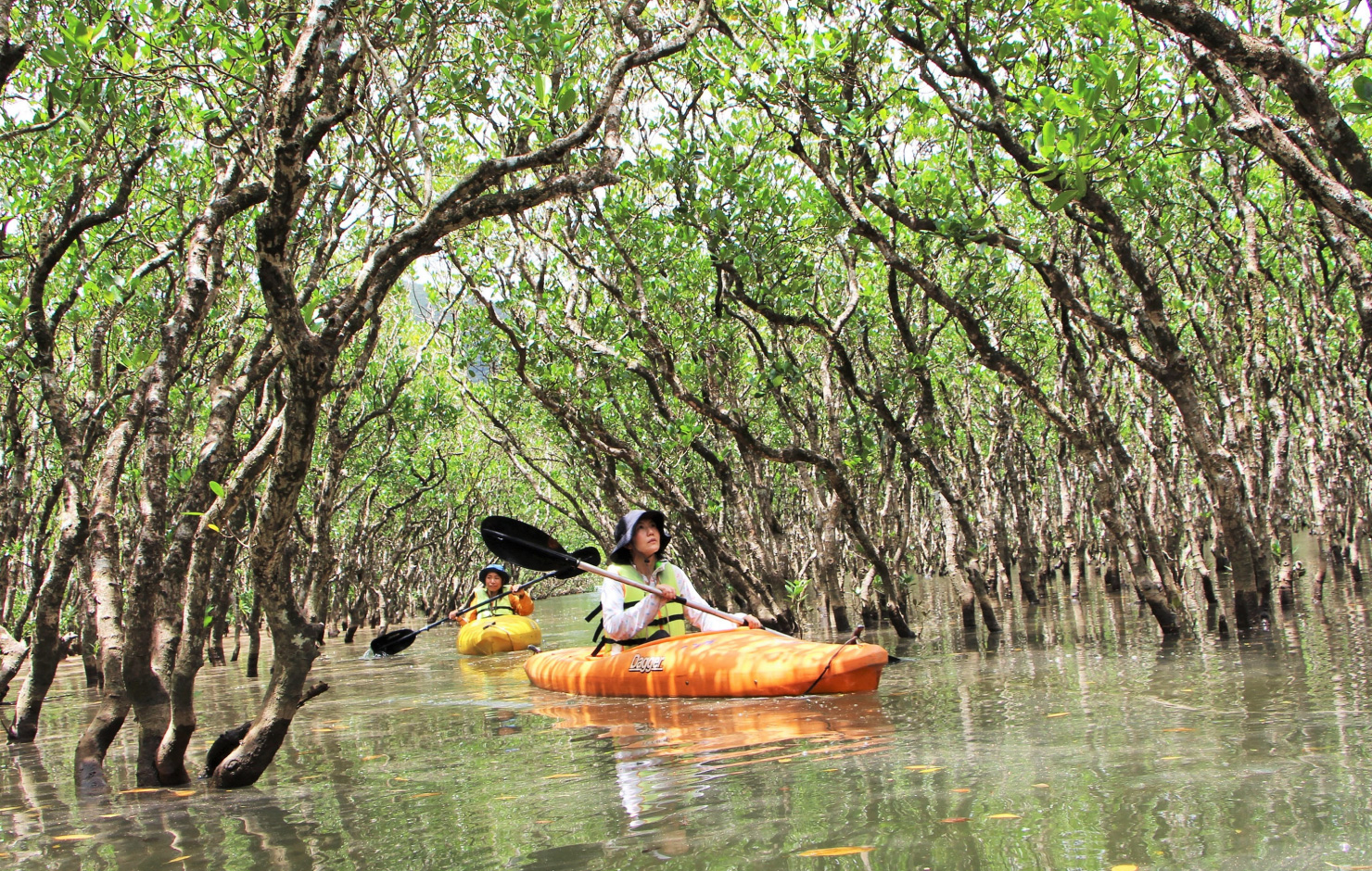 マングローブ原生林をカヌーで巡る