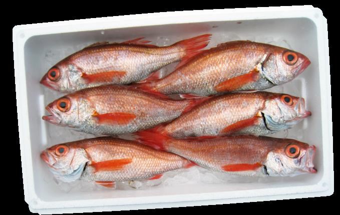 高級魚・のどぐろも、お店の人と<br>話していると安くなるかも?