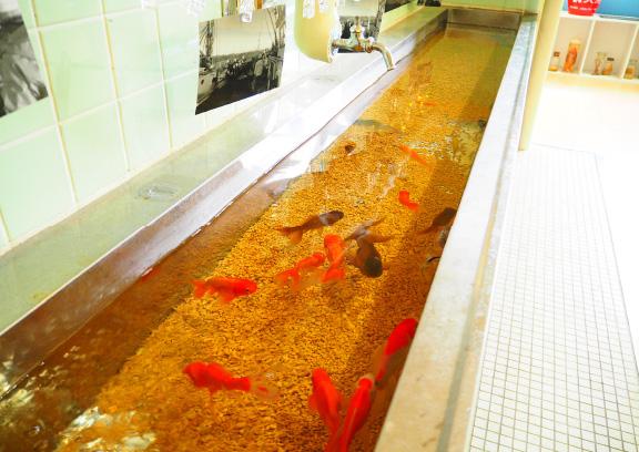 「むろと廃校水族館」