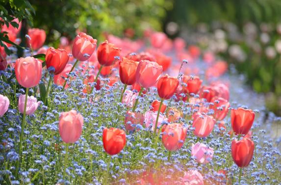 川村「モネの庭」マルモッタン