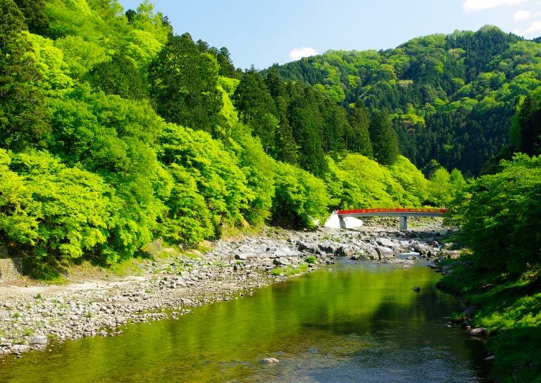 紅葉の名所、香嵐渓でグリーンシャワーを浴びる