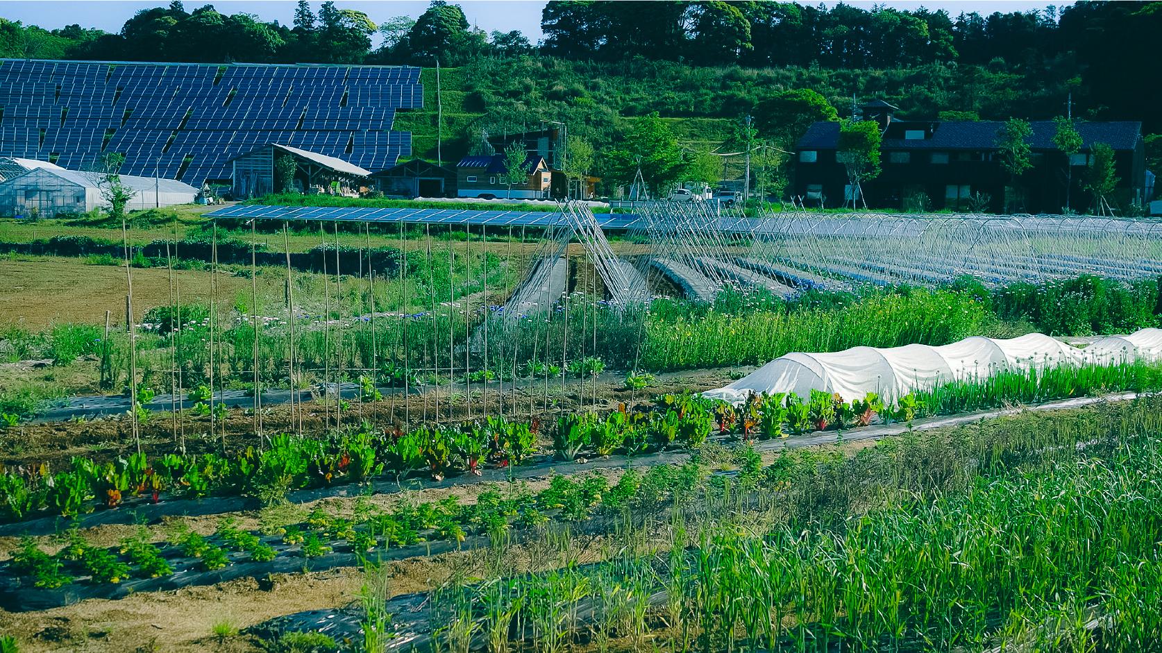 多種多様な作物が実る「エディブルガーデン」では、農業体験ができる