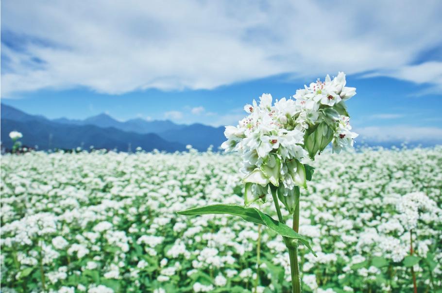 一面のそばの花畑に感動!