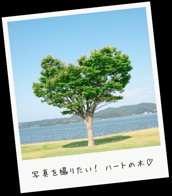 めぐみのゆ公園 写真を撮りたい!ハートの木