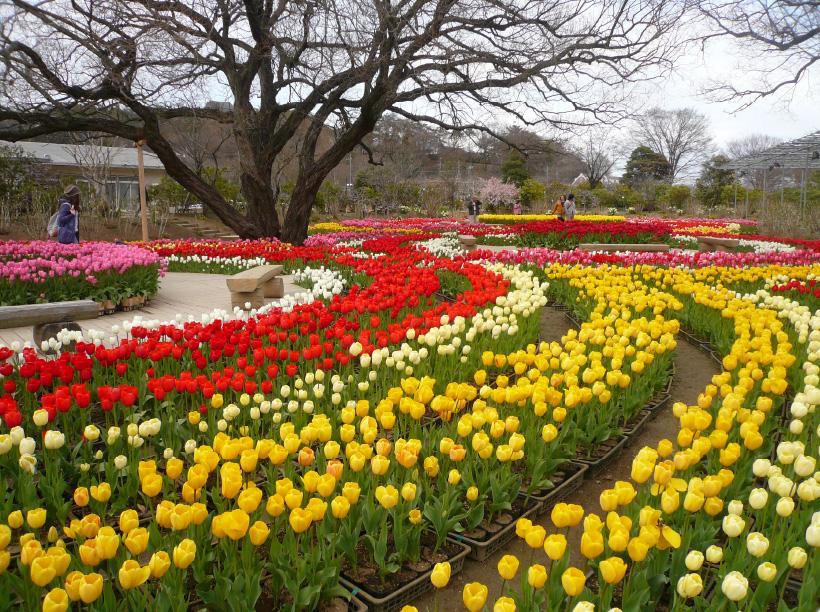 2 咲き誇る春の花に癒されるあしかがフラワーパーク