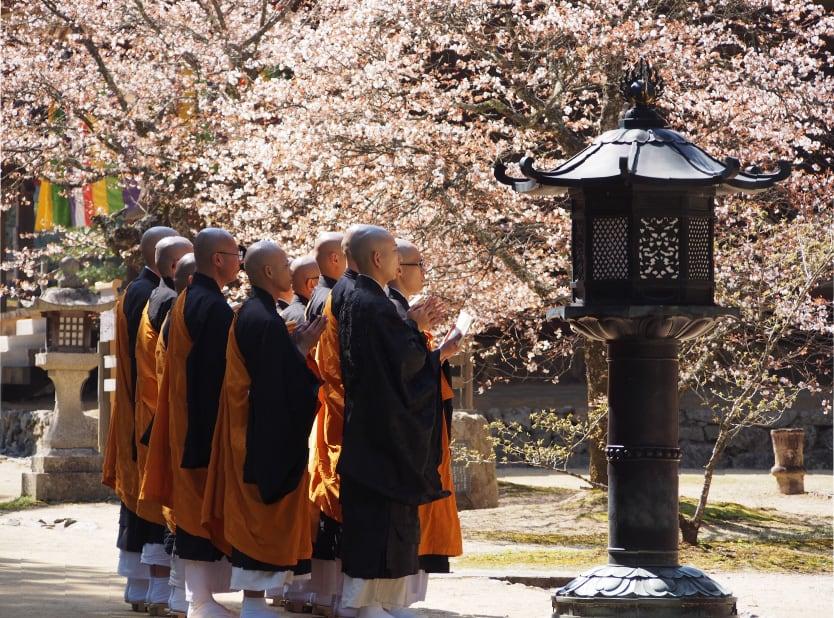 高野山・三昧堂の西行桜