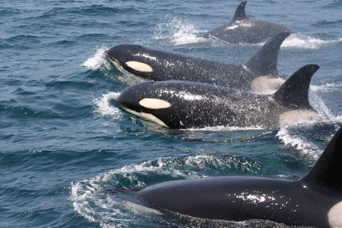 陸から近い海域でクジラ・イルカウォッチング