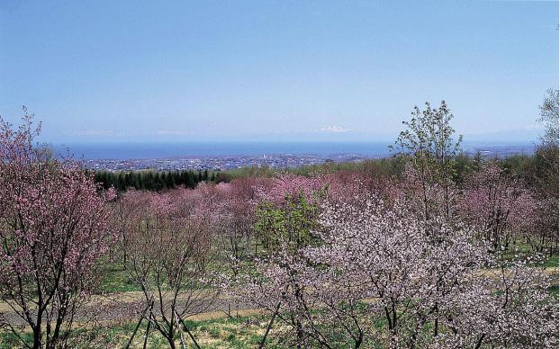 """北の大地で今年最後の""""桜""""に合う"""