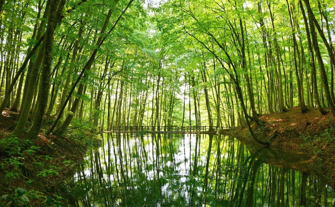 ブナ林の緑の世界に迷い込む