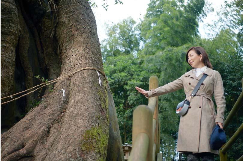 Tsukazaki Kofun Cluster & Giant Camphor Tree in Tsukazaki