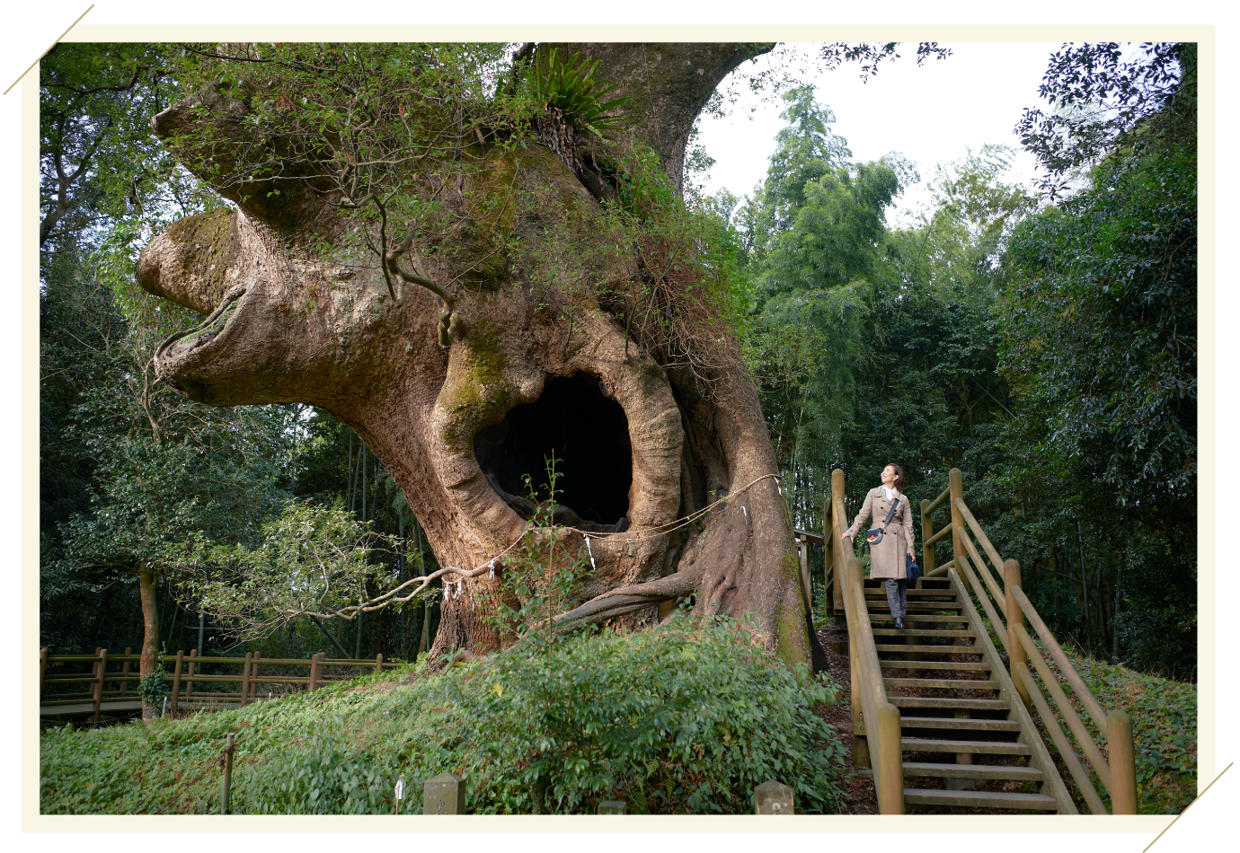 Miki Maya at Tsukazaki Kofun Cluster & Giant Camphor Tree in Tsukazaki
