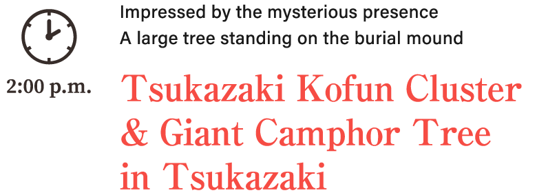 Impressed by the mysterious presence A large tree standing on the burial mound. Tsukazaki Kofun Cluster & Giant Camphor Tree in Tsukazaki