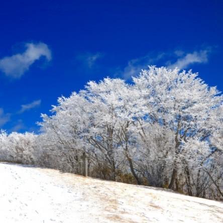 愛知・茶臼山で霧氷鑑賞 幻想的な冬に出合う旅