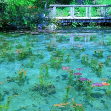 下呂温泉でスイーツ巡り モネの池も楽しむ女子旅