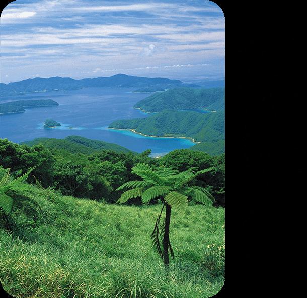 「奄美大島」鹿児島県 癒しのネイチャーリゾート
