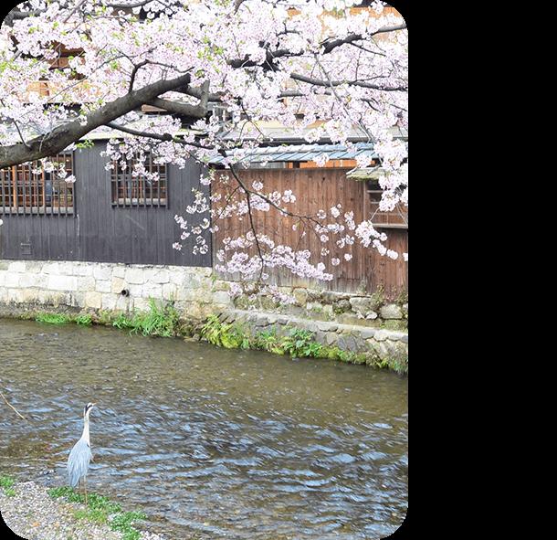 エリアフィーチャー「京都」春の一日、新しい京都で遊ぶ
